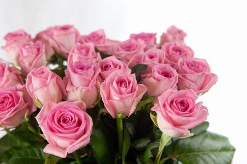 Купить в Харькове Роза Aqua