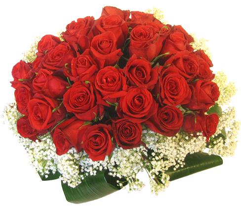 Букет из 35 красных роз, с гипсофилой и листьями, с лентой