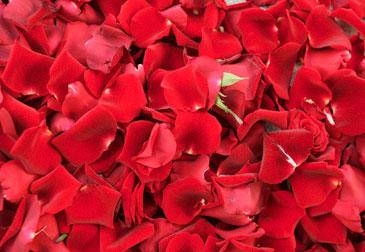 Купить в Харькове Лепестки роз красные