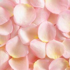 Лепестки роз розовые