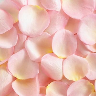 Купить в Харькове Лепестки роз розовые