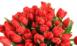 Купить в Харькове Красные Тюльпаны