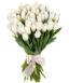 Купить в Харькове Букет Тюльпанов белых