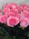 Купить в Харькове Роза Блаш Акито