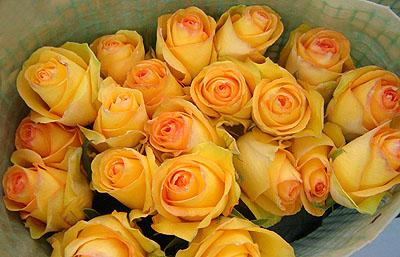 Купить в Харькове Роза Дежавю