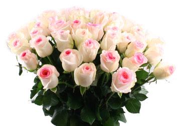 Купить в Харькове Роза Дольче Вита