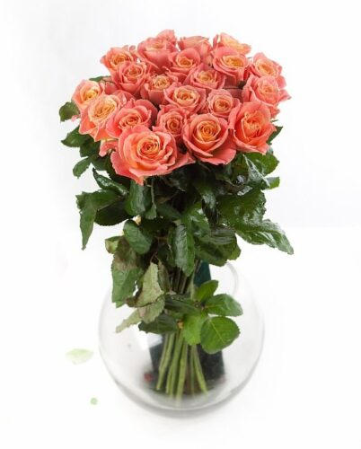 Купить в Харькове Роза Мисс Пигги