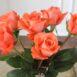 Купить в Харькове Роза Мове Стар