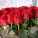 Купить в Харькове Роза Фридом (Freedom)