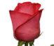 Купить в Харькове Роза Рафаэлла
