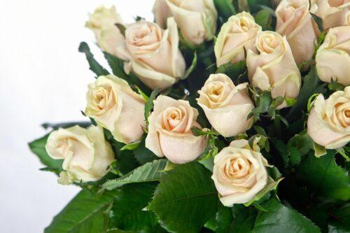 Купить в Харькове Роза Талея